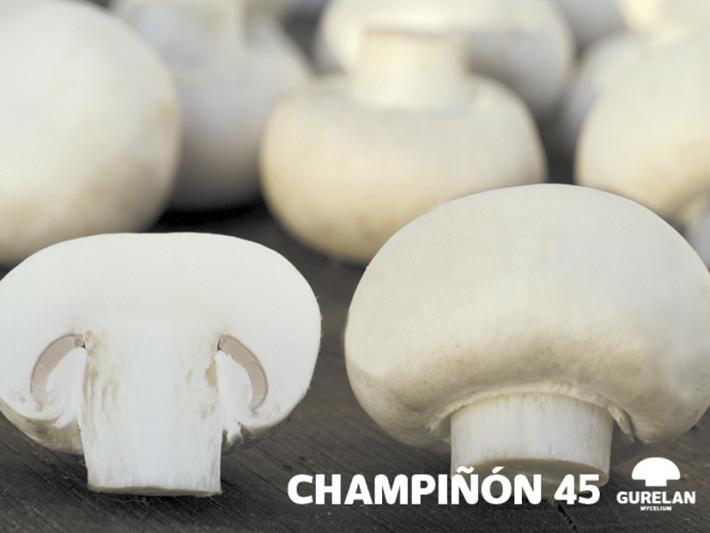 Champiñón <em>(Agaricus bisporus)</em> variedad 45