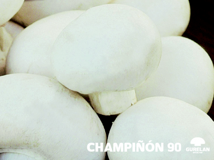Champiñón <em>(Agaricus bisporus)</em> variedad 90