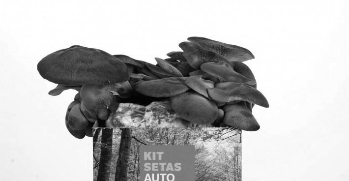 KIT AUTOCULTIVO de seta de cardo en nuestra tienda online